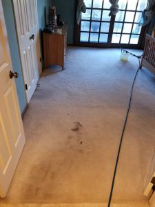 Carpet Cleaning San Diego - Absolutely
